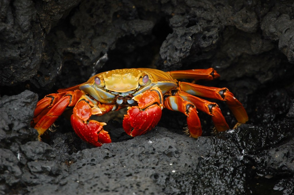 Colorful Crab