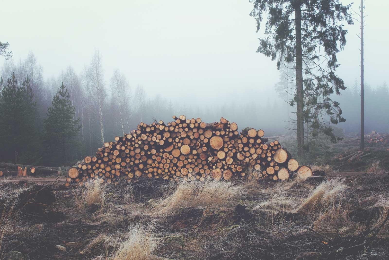 pile-of-logs
